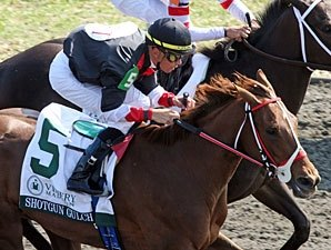 Shotgun Gulch Headed to Churchill Downs
