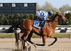 Nashua Stakes winner Buddy's Saint takes on 5, including Champagne winner Homeboykris, in the Remsen.
