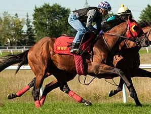 Up With the Birds - Woodbine August 15, 2013
