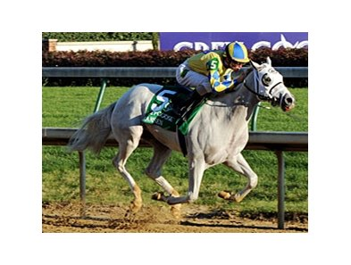 "Juvenile champion Hansen takes on 5 in the Holy Bull.<br><a target=""blank"" href=""http://www.bloodhorse.com/horse-racing/photo-store?ref=http%3A%2F%2Fpictopia.com%2Fperl%2Fgal%3Fprovider_id%3D368%26ptp_photo_id%3D9757123%26ref%3Dstory"">Order This Photo</a>"
