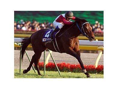 Admire Moon wins the Japan Cup.