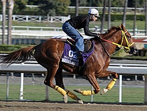 Indian Jones - 2013 Breeders' Cup, October 29, 2013.