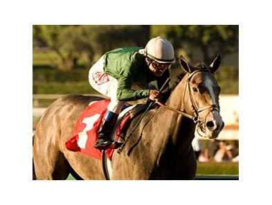 "The Pamplemousse will make his next start in the Santa Anita Derby on April 4.<br><a target=""blank"" href=""http://www.bloodhorse.com/horse-racing/photo-store?ref=http%3A%2F%2Fpictopia.com%2Fperl%2Fgal%3Fprovider_id%3D368%26ptp_photo_id%3D7456874%26ref%3Dstory"">Order This Photo</a>"