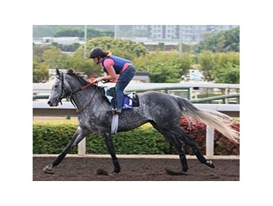 Kip Deville prepares for the Cathay Pacific Hong Kong Mile.