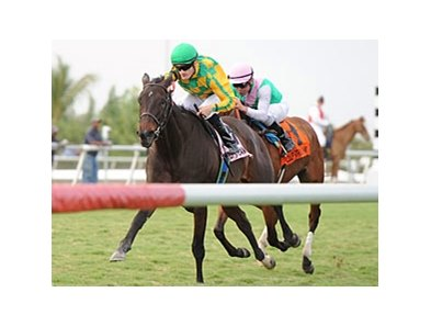 "Never Retreat and Julien Leparoux take the Honey Fox at Gulfstream. <br><a target=""blank"" href=""http://www.bloodhorse.com/horse-racing/photo-store?ref=http%3A%2F%2Fpictopia.com%2Fperl%2Fgal%3Fprovider_id%3D368%26ptp_photo_id%3D9432741%26ref%3Dstory"">Order This Photo</a>"