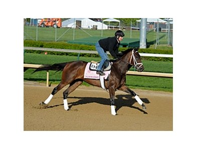 "Unlimited Budget<br><a target=""blank"" href=""http://photos.bloodhorse.com/TripleCrown/2013-Triple-Crown/Kentucky-Derby-Workouts/29026796_jvcnn8#!i=2478290412&k=kn3j2sK"">Order This Photo</a>"
