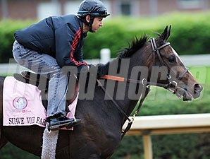 Suave Voir Faire at Churchill Downs 5/4/2011.