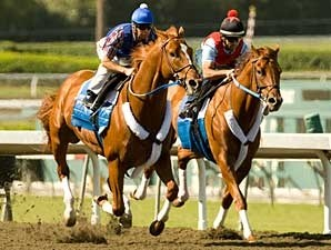 Curlin works with stablemate Hawaii Calls at Santa Anita Oct. 13.