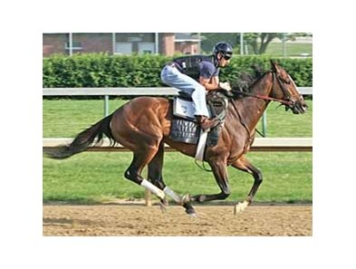 Denis of Cork works at Churchill Downs on June 2 with Robby Albarado in the irons.