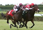 Tropical Turf entrants Pickapocket (right) and Bim Bam finished a nose apart in the Bonnie Heath Turf Cup.