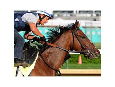 "Normandy Invasion<br><a target=""blank"" href=""http://photos.bloodhorse.com/TripleCrown/2013-Triple-Crown/Kentucky-Derby-Workouts/29026796_jvcnn8#!i=2489745846&k=3ddv8WV"">Order This Photo</a>"