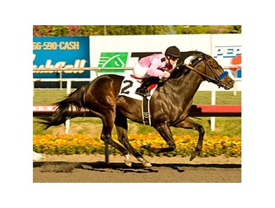 "Cost of Freedom cruises to victory in the Vernon O. Underwood Stakes.<br><a target=""blank"" href=""http://www.bloodhorse.com/horse-racing/photo-store?ref=http%3A%2F%2Fpictopia.com%2Fperl%2Fgal%3Fprovider_id%3D368%26ptp_photo_id%3D9299133%26ref%3Dstory"">Order This Photo</a>"