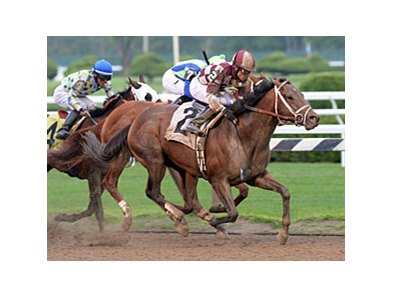 "Forty Tales has won three straight graded stakes.<br><a target=""blank"" href=""http://photos.bloodhorse.com/AtTheRaces-1/at-the-races-2013/27257665_QgCqdh#!i=2662525673&k=GLKgzQd"">Order This Photo</a>"