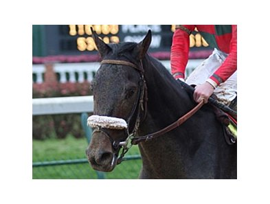 Anak Nakal will try to improve on his seventh place Kentucky Derby (gr. I) finish in the June 7 Belmont (gr. I).
