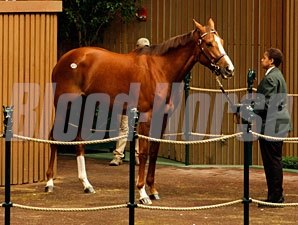 Cozi Rosie in the 2012 Keeneland January Sale.