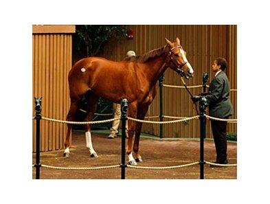 Cozi Rosie in the Keeneland January Sale.
