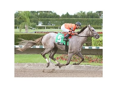 Undefeated Frolic's Dream makes her 3-year-old debut in the $100,000 Old Hat Stakes at Gulfstream Park.