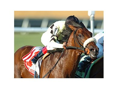 Fountain of Youth winner Quality Road is one of the leading contenders for the Florida Derby.