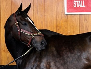 Zenyatta at the 2010 Breeders' Cup.