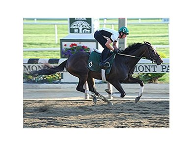 Royal Delta jogs on the Belmont track.