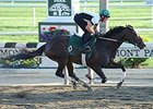 Champion Royal Delta Breezes at Belmont Park
