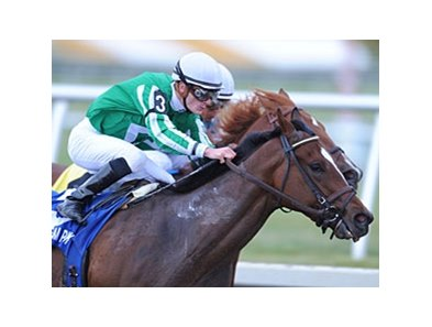 "Capt. Candyman Can, winner of the Jan. 30 Hutcheson at Gulfstream Park <br><a target=""blank"" href=""http://www.bloodhorse.com/horse-racing/photo-store?ref=http%3A%2F%2Fpictopia.com%2Fperl%2Fgal%3Fprovider_id%3D368%26ptp_photo_id%3D7601245%0D%0A%26ref%3Dstory"">Order This Photo</a>"