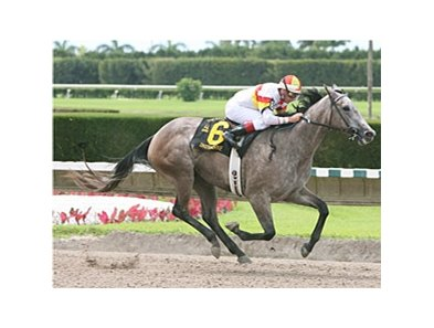 Indyanne won the 2008 Azalea at Calder.