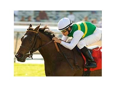 "Pasar Silbano will be among the contenders in the Providencia Stakes.<br><a target=""blank"" href=""http://www.bloodhorse.com/horse-racing/photo-store?ref=http%3A%2F%2Fpictopia.com%2Fperl%2Fgal%3Fprovider_id%3D368%26ptp_photo_id%3D7618322%26ref%3Dstory"">Order This Photo</a>"