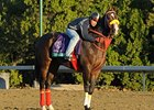 "Trinniberg checks out Santa Anita on October 30.<br><a target=""blank"" href=""http://photos.bloodhorse.com/BreedersCup/2012-Breeders-Cup/Works/26130247_gxH6nS#!i=2185592531&k=7d3HZM6"">Order This Photo</a>"