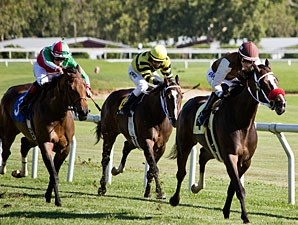 Catrageous wins the 2013 Wine Country Stakes.