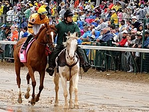 Wise Dan in the Woodford Reserve post parade.