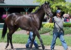 Keeneland Gets Started With Transylvania