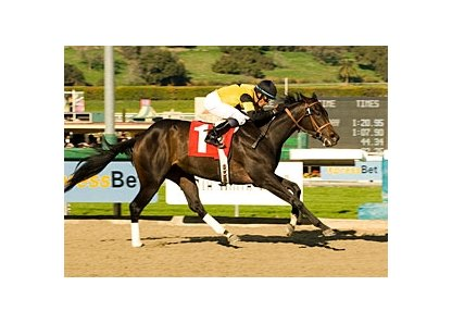 "Once-beaten El Gato Malo is being pointed to the April 5 Santa Anita Derby (gr. I).<br><a target=""blank"" href=""http://www.bloodhorse.com/horse-racing/photo-store?ref=http%3A%2F%2Fpictopia.com%2Fperl%2Fgal%3Fprovider_id%3D368%26ptp_photo_id%3D3277578%26ref%3Dstory"">Order This Photo</a><br>"