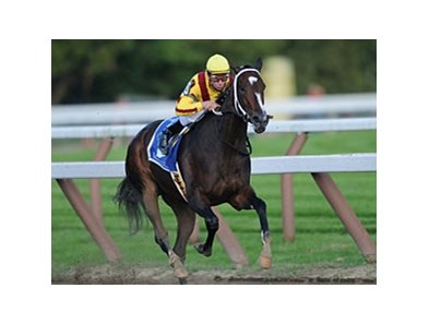 "Rachel Alexandra<br><a target=""blank"" href=""http://www.bloodhorse.com/horse-racing/photo-store?ref=http%3A%2F%2Fpictopia.com%2Fperl%2Fgal%3Fprovider_id%3D368%26ptp_photo_id%3D8459936%26ref%3Dstory"">Order This Photo</a>"