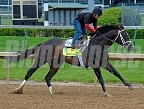Verrazano works at Churchill Downs 4/27/2013.