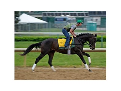 "Hold Me Back gallops at Churchill Downs on April 30. <br><a target=""blank"" href=""http://www.bloodhorse.com/horse-racing/photo-store?ref=http%3A%2F%2Fgallery.pictopia.com%2Fbloodhorse%2Fgallery%2F81492%2Fphoto%2F8057486%2F%3Fo%3D6"">Order This Photo</a>"
