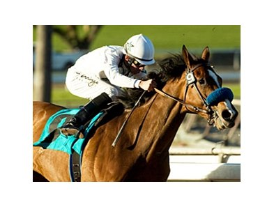 Well Armed is set to return in the San Diego Handicap.