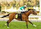 Champs Elysees could become the fifth grade I winner for his dam, Hasili (IRE).