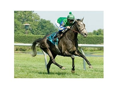 Cheetah won the Robert G. Dick Memorial Stakes at Delaware Park in July.
