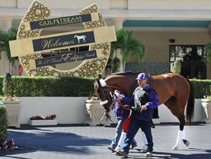 Mucho Macho Man Schooling at Gulfstream Park on January 16, 2014.