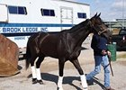 Revolutionary arrives at Churchill Downs.