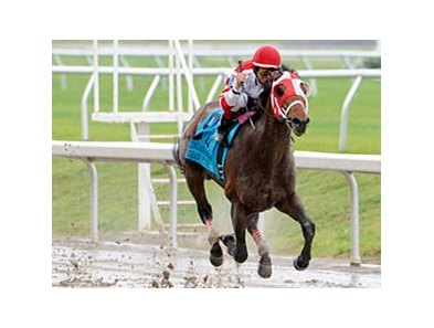 "Friesan Fire splashes home in the Louisiana Derby.<br><a target=""blank"" href=""http://www.bloodhorse.com/horse-racing/photo-store?ref=http%3A%2F%2Fpictopia.com%2Fperl%2Fgal%3Fprovider_id%3D368%26ptp_photo_id%3D7901224%26ref%3Dstory"">Order This Photo</a>"