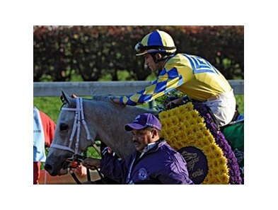 "2011 Breeders' Cup Juvenile winner Hansen <br><a target=""blank"" href=""http://www.bloodhorse.com/horse-racing/photo-store?ref=http%3A%2F%2Fpictopia.com%2Fperl%2Fgal%3Fprovider_id%3D368%26ptp_photo_id%3D9757128%26ref%3Dstory"">Order This Photo</a>"