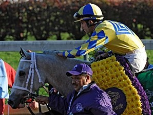 Hansen in the 2011 Breeders' Cup Juvenile.