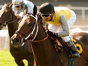Celtic Princess wins the 2011 Royal Heroine Mile.
