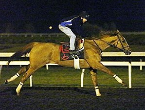 Wise Dan works at Keeneland April 8th.