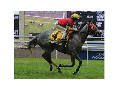 Windward Islands won the Nijinsky in 2010.