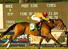 Favored Tuscan Evening Takes Buena Vista