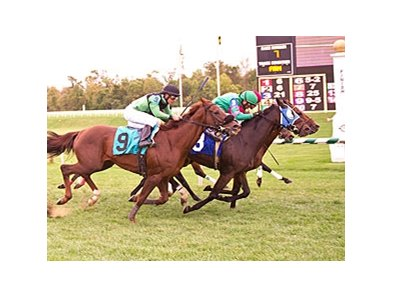 Two horses finish on even turns for first and two are deadlocked for third.
