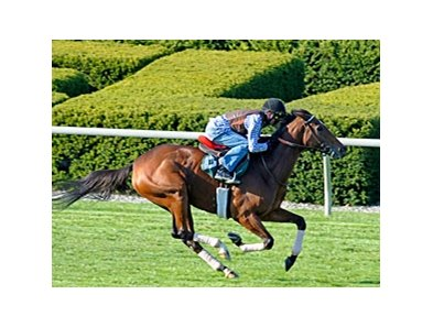 "Proviso works on the turf at Keeneland on Oct. 23.<br><a target=""blank"" href=""http://www.bloodhorse.com/horse-racing/photo-store?ref=http%3A%2F%2Fpictopia.com%2Fperl%2Fgal%3Fprovider_id%3D368%26ptp_photo_id%3D9244613%26ref%3Dstory"">Order This Photo</a>"